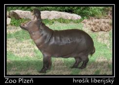 magnetka foto : archiv Zoologické zahrady 000004210250