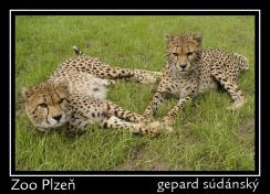 magnetka foto : archiv Zoologické zahrady 000004210473