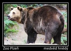 magnetka foto : archiv Zoologické zahrady 000004210515