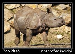 magnetka foto : archiv Zoologické zahrady 000004210516.