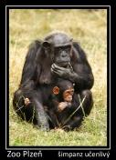 magnetka foto : archiv Zoologické zahrady 000004210517