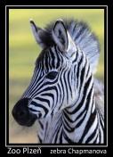 magnetka foto : archiv Zoologické zahrady 000004210519