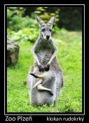 magnetka foto : archiv Zoologické zahrady