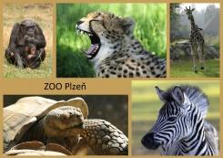 pohled A5 foto : archiv Zoologické zahrady Afrika