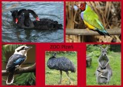 pohled A5 foto : archiv Zoologické zahrady Austrálie