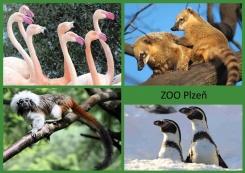pohled A5 foto : archiv Zoologické zahrady Jižní Amerika
