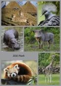 pohled A5 foto : archiv Zoologické zahrady Novinky