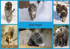 pohled A5 foto : archiv Zoologické zahrady Palearkt
