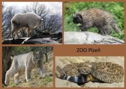 pohled A5 foto : archiv Zoologické zahrady Severní Amerika