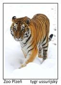 magnetka foto : archiv Zoologické zahrady 000004210474