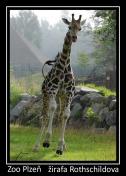 magnetka foto : archiv Zoologické zahrady 000004210475