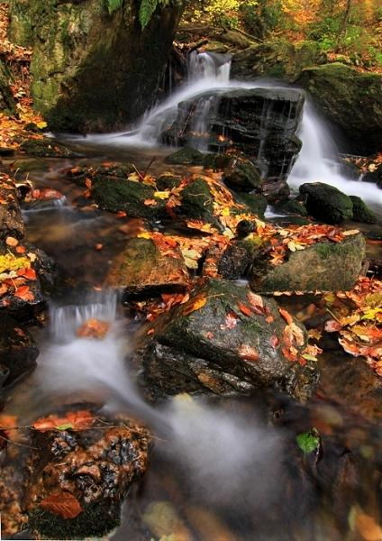Rešovská jeseň V