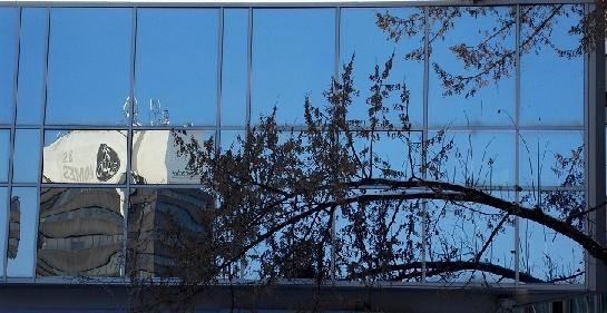 okno větev a odraz