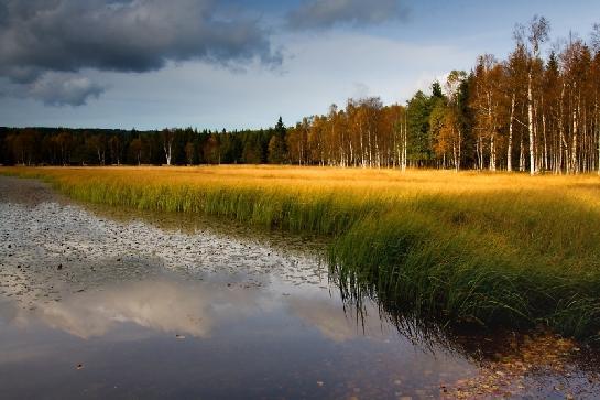 Starý rybník podzimní