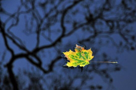 Poslední známka podzimu
