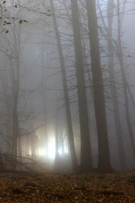 Mrazivá mlha na Drbákově