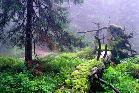Vysoké Tatry u Hincova potoka v Mengusovské dolině