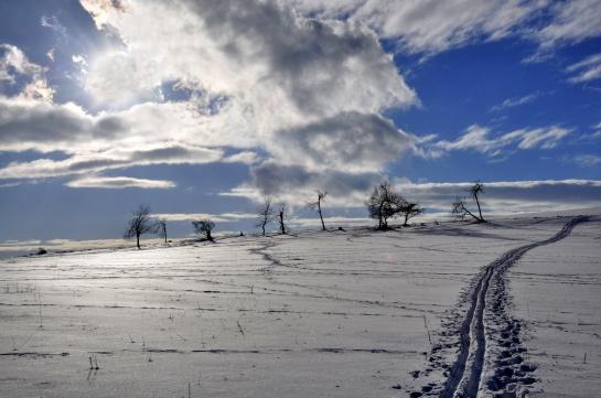 Stopa v zimní krajině
