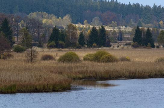 Brdy - Dolejší padrťský rybník
