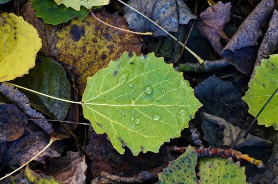 podzim na Slapech