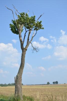 Flora a fauna v okolí Teplé