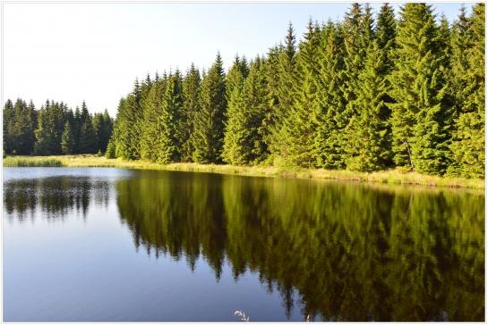 Příroda, Novodomská rašeliniště, Hora Sv.Šebestiána, Chomutovsko No.1