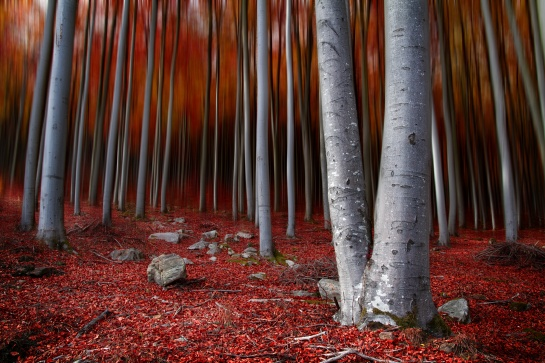 I lesy se červenají
