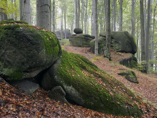 Oldřichovské háje a skály NS