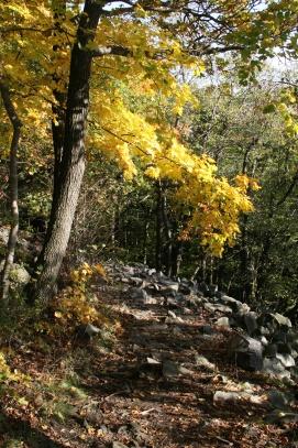 Sluneční svit do podzimního lesa