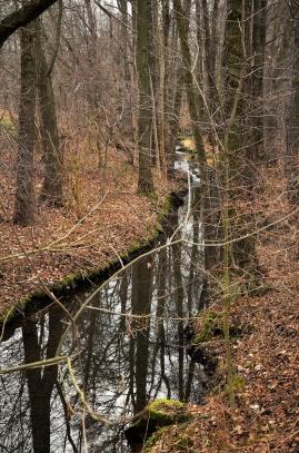 podzim v lesoparku ,Příbram