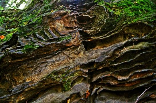 Přírodní památka Špičák u Střezivojic