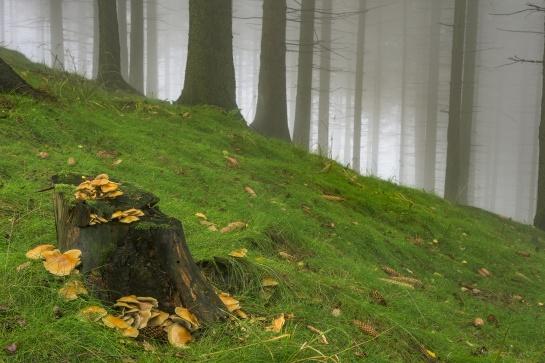 Ve smrkovém lese