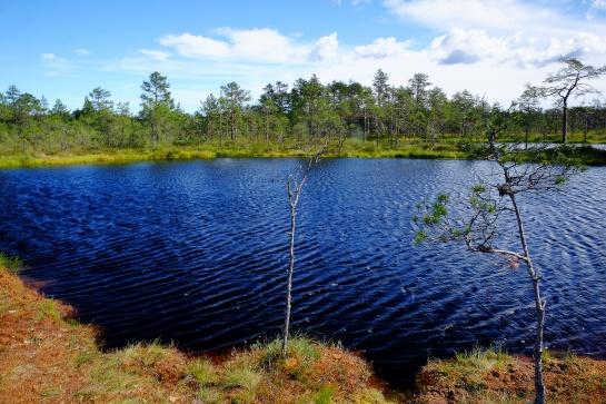 Cesta rašeliništěm Viru raba v Estonsku