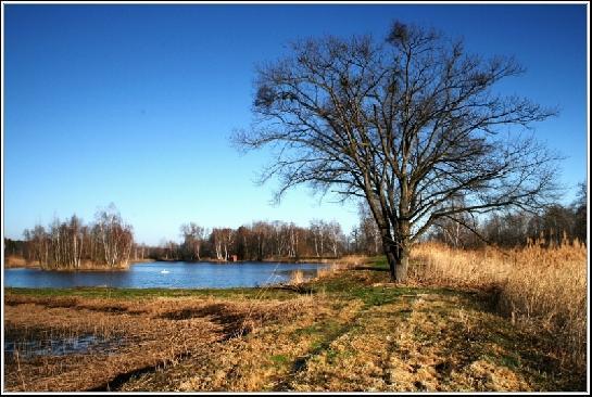 Rybník a strom