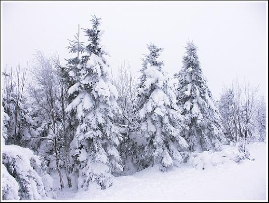Čerstvý sníh.